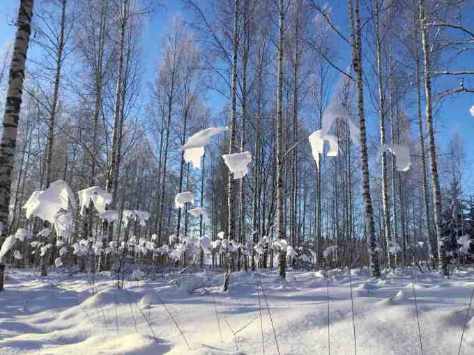 Koivu Forest, Haukijärvi, Finland